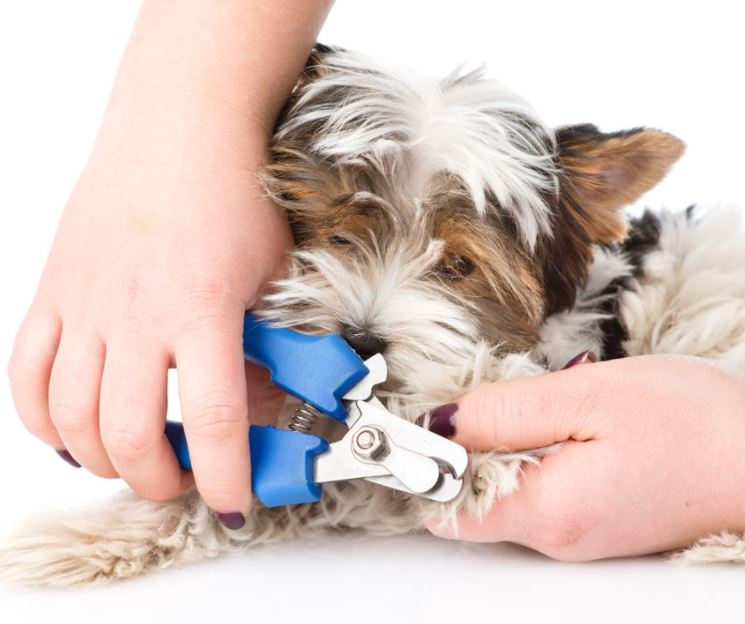 Making nail clipping less stressful dog allergies treatments while a vet can and will clip your dogs nails for you many times you will want to save the cost and trip by doing it yourself solutioingenieria Image collections